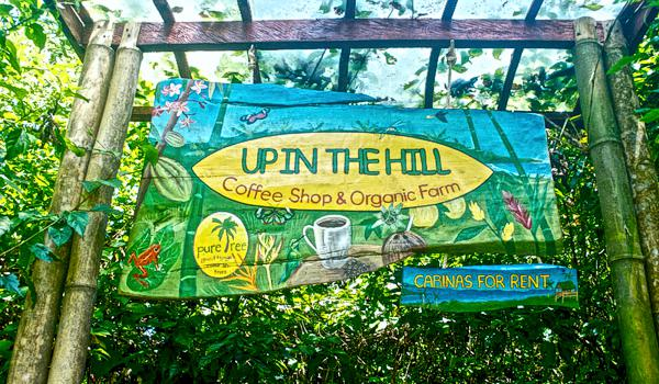 Up in the Hill Coffee Shop and Organic Farm